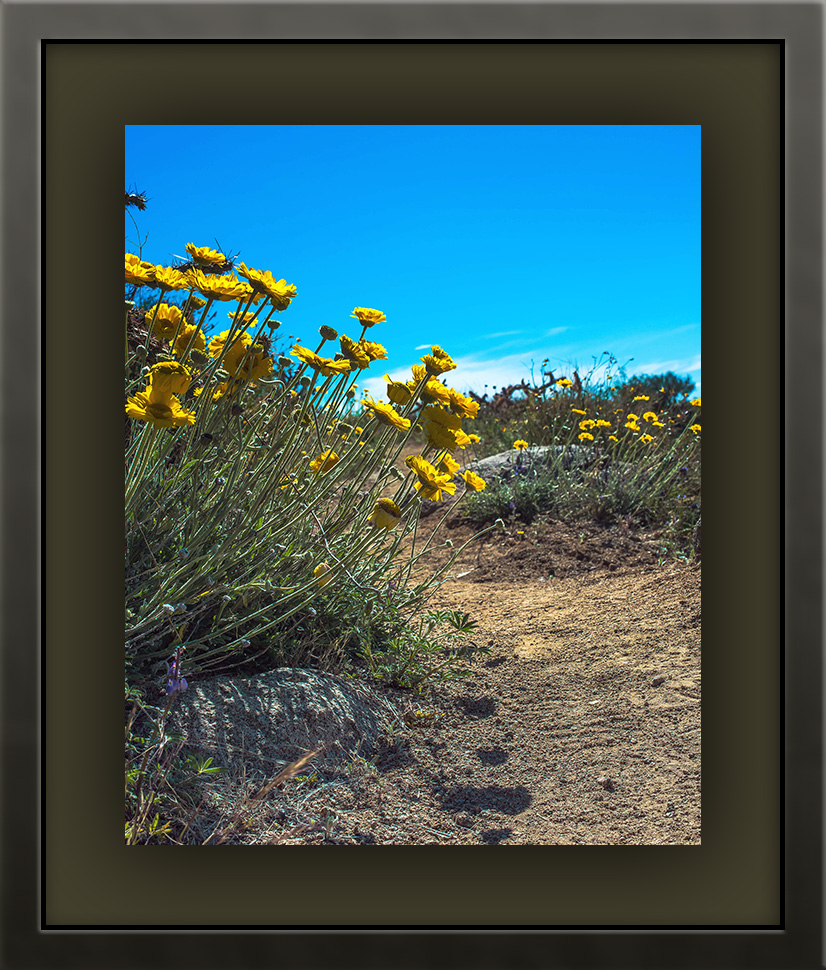 Wildflowers (1 of 1)-8 blog framed