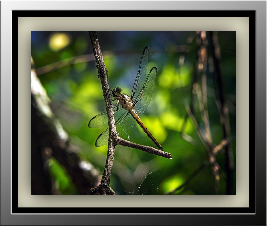 Dragon Fly2015 05 04_0613_edited-2 blog
