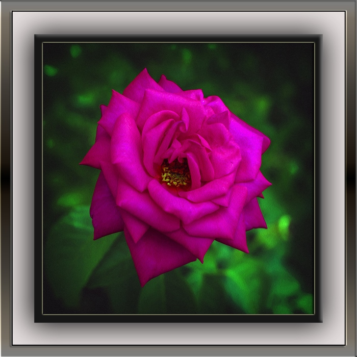 Rose (1 of 1) art blog