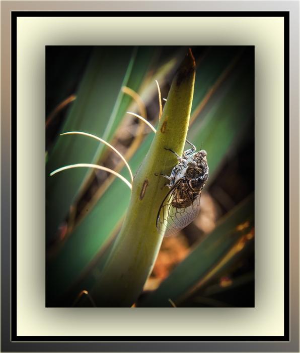Cicada(1 of 1)-9 blog