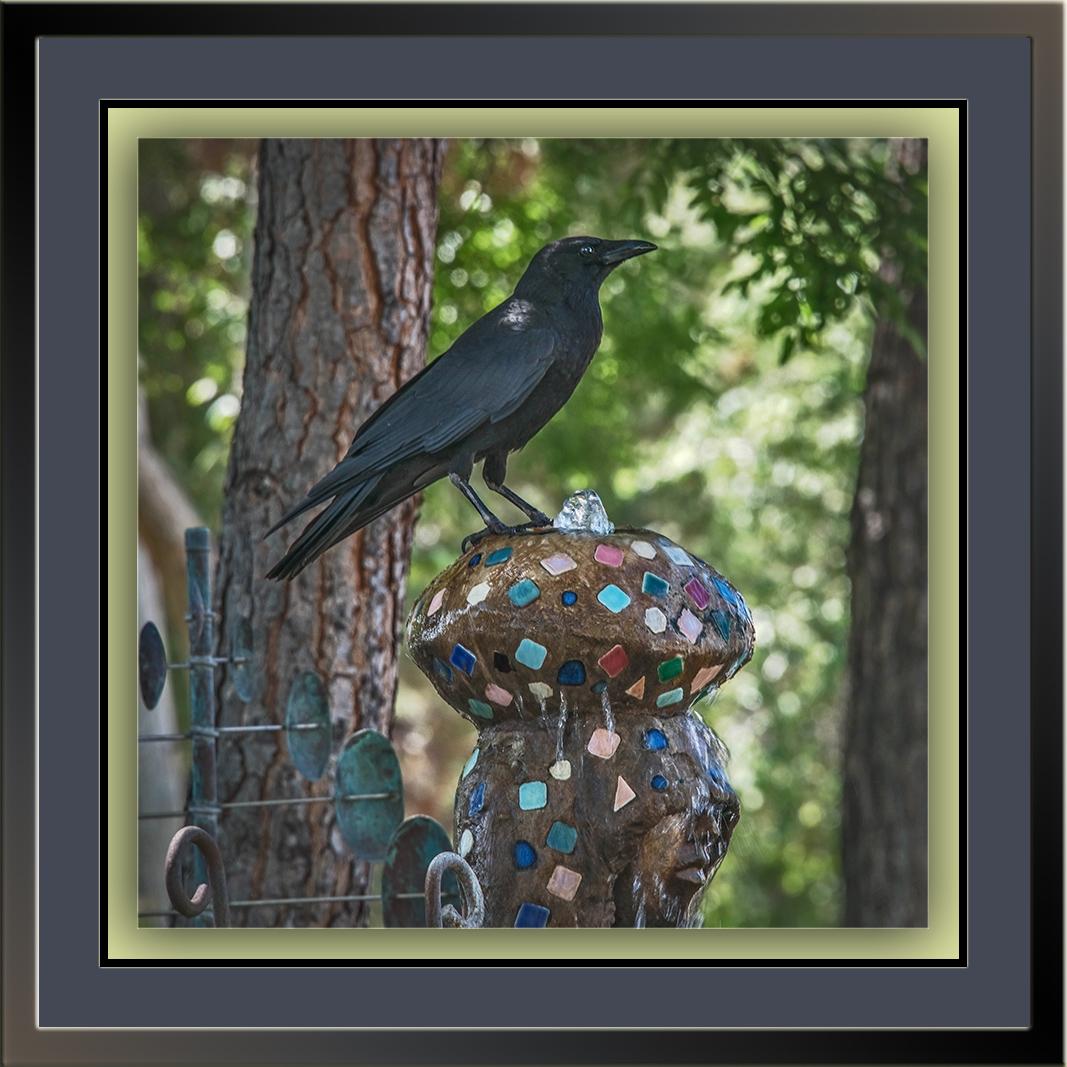 Raven (1 of 1) blog