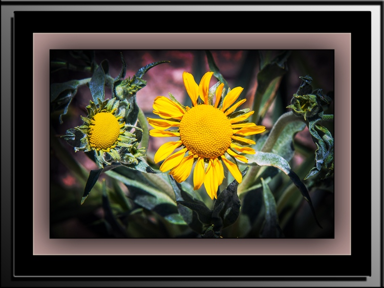 Sneezeweed (1 of 1)-10 blog