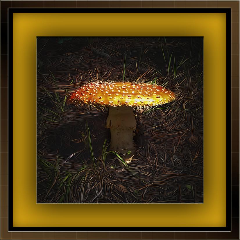Mushroom (1 of 1) art blog