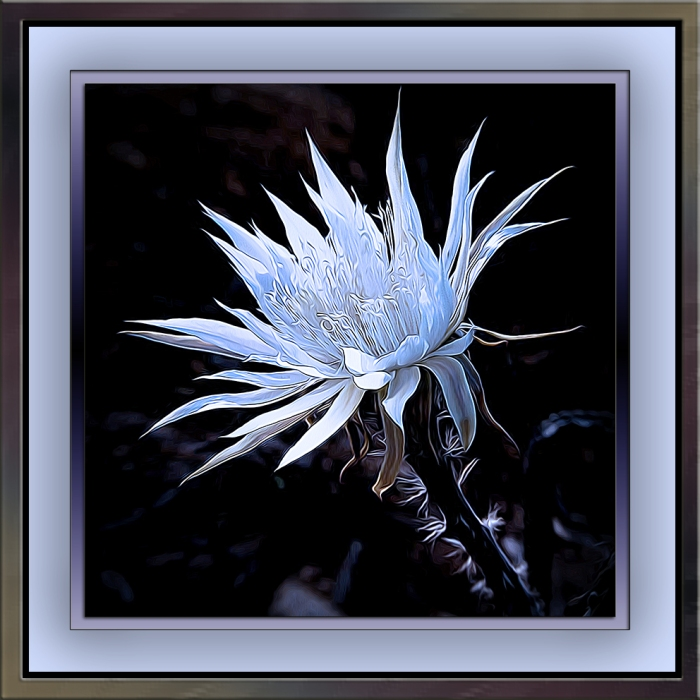 Night-Blooming Cereus art blog
