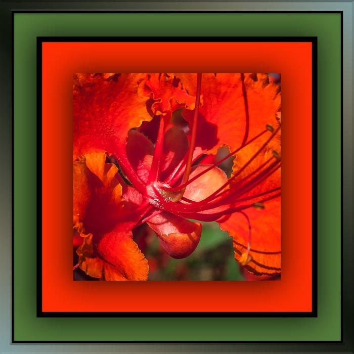 Red Bird of Paradise (1 of 1)-6 blog II