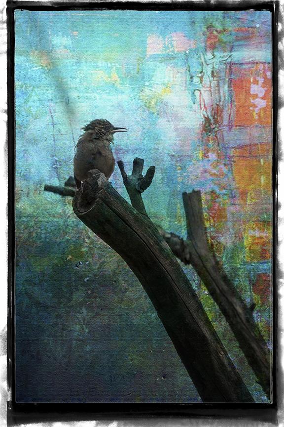 Bird on  Limb Art July 2015-8227 blog