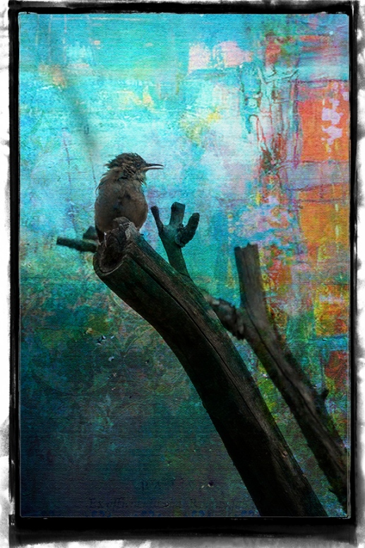 Bird on  Limb Art July 2015-8227 blog