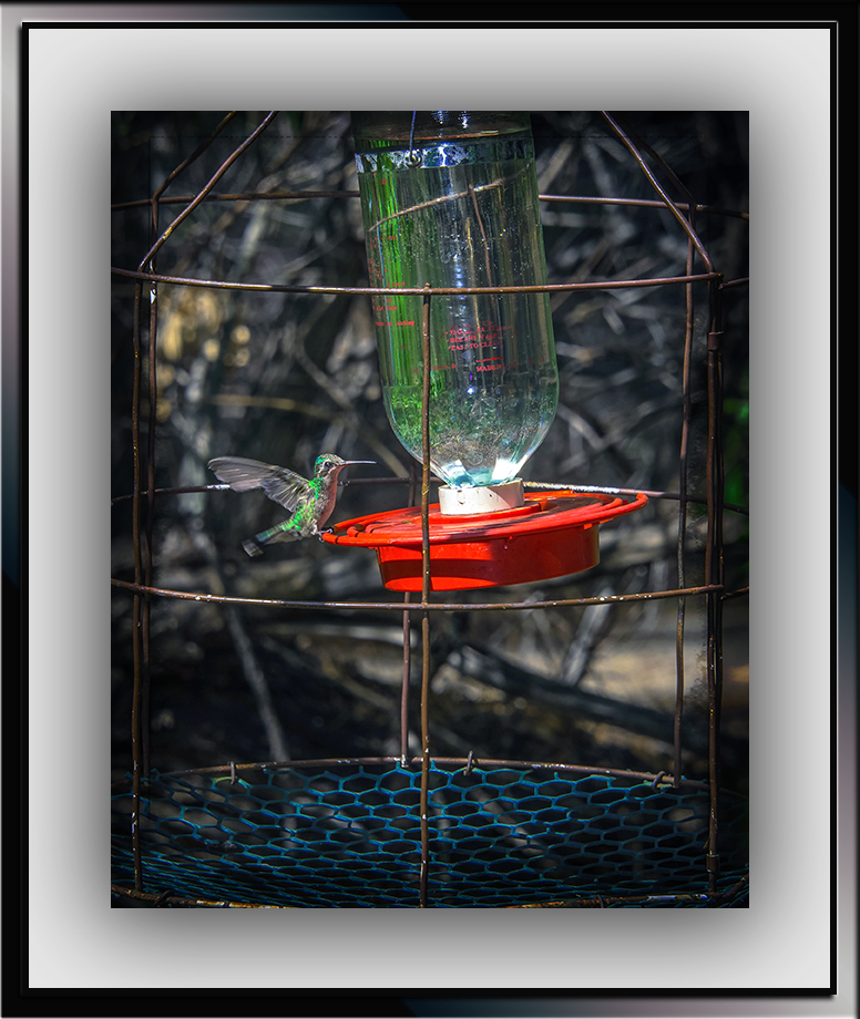 Broad-billed Hummingbird (1 of 1)-2 blog