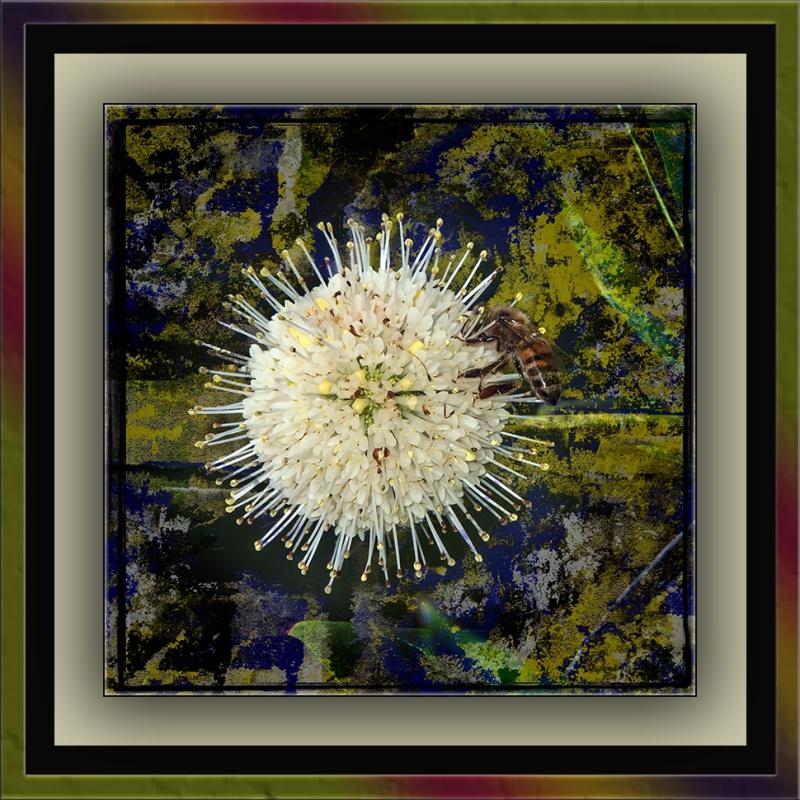 Buttonbush (1 of 1) grauge art blog