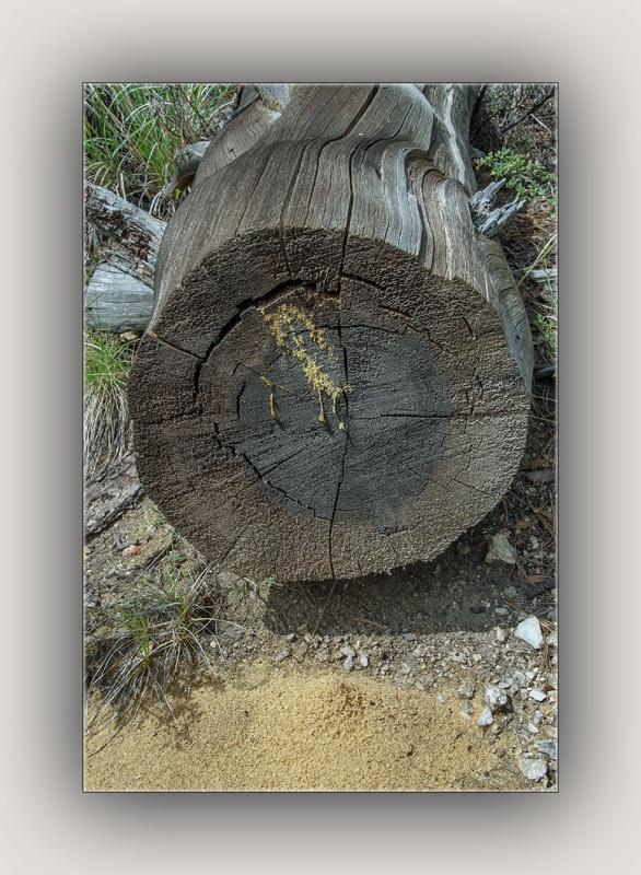 Carpenter Ants (1 of 1) blog