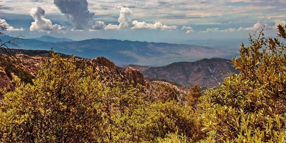 View Toward The Rincon Mountains