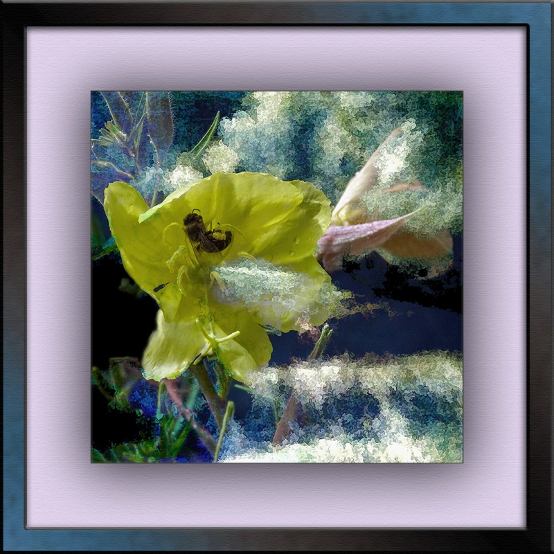 Hooker's evening primrose (1 of 1) art blog II