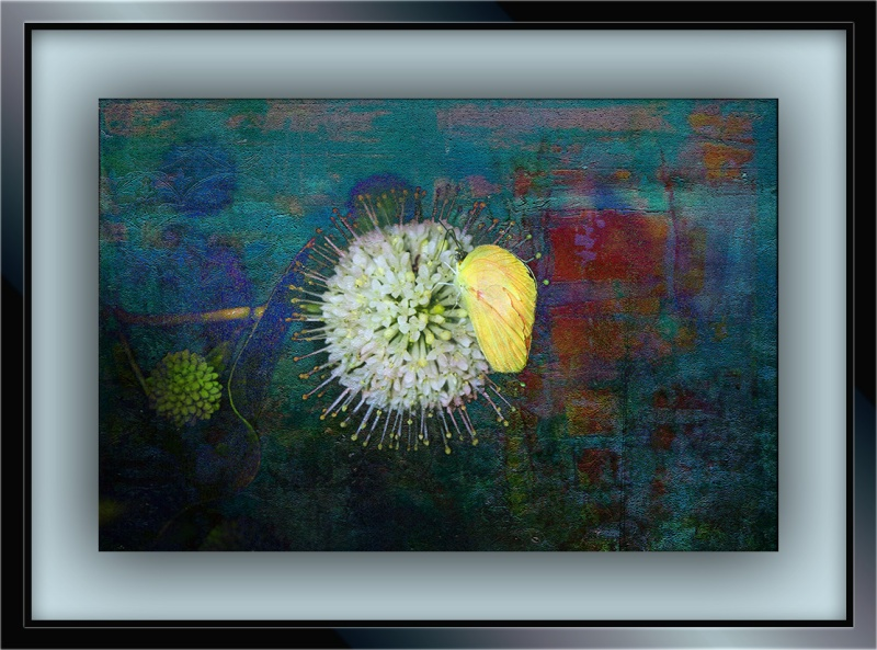 Insects on Buttonbush (1 of 1)-5 art blog