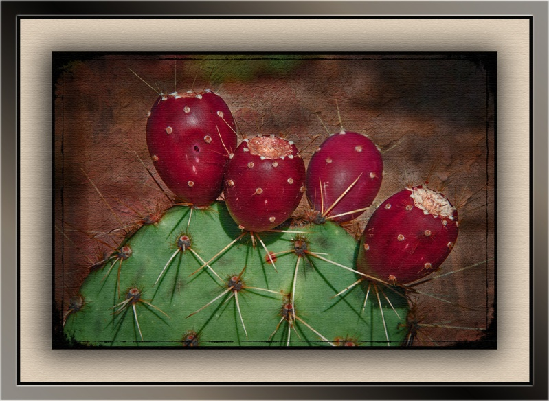 Prickly Pean Fruit (1 of 1) art blog