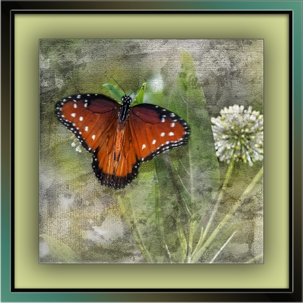 Viceroy Butterfly on Buttonbush (1 of 1) art blog