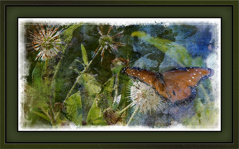Viceroy Butterfly on Buttonbush (1 of 1) Grunge Art-2 blog