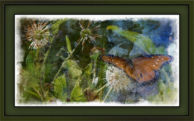 Viceroy Butterfly on Buttonbush (1 of 1) Grunge Art-2 blog