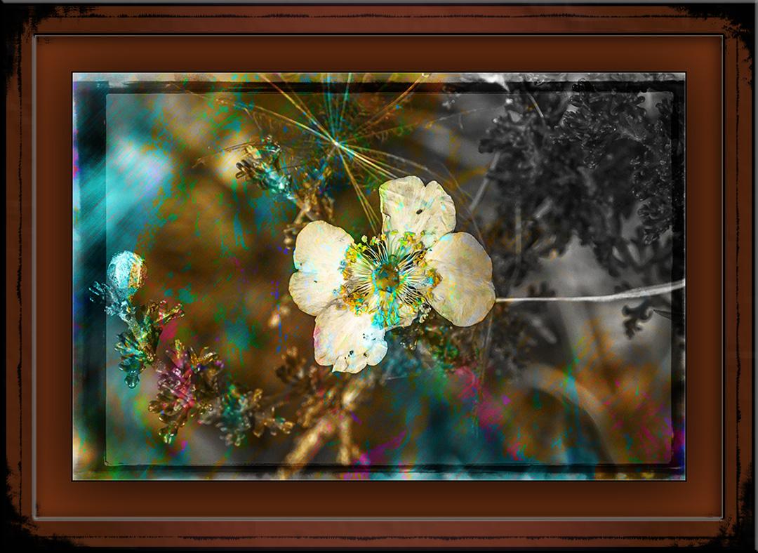 white wildflower (1 of 1) art blog