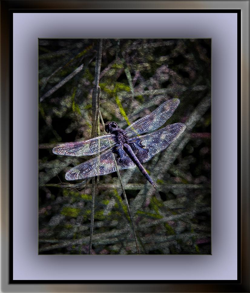 Dragonfly_DSC8503 grunge art blog