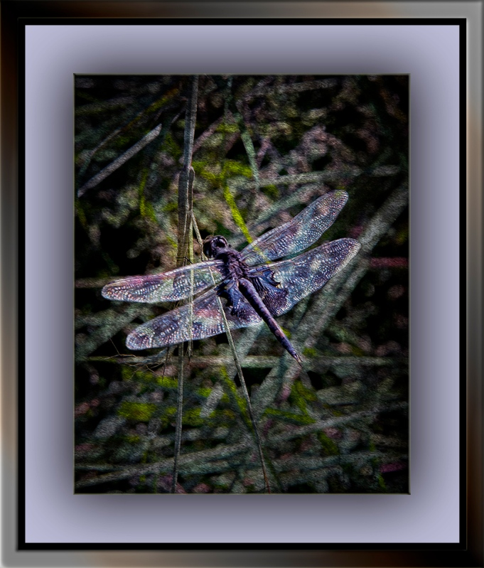 Dragonfly_DSC8503 grunge art blog