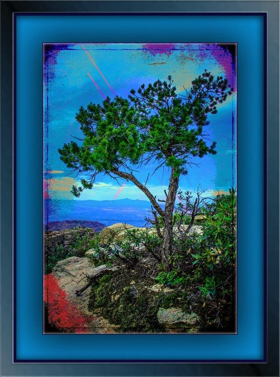 juniper tree (1 of 1) grunge art blog