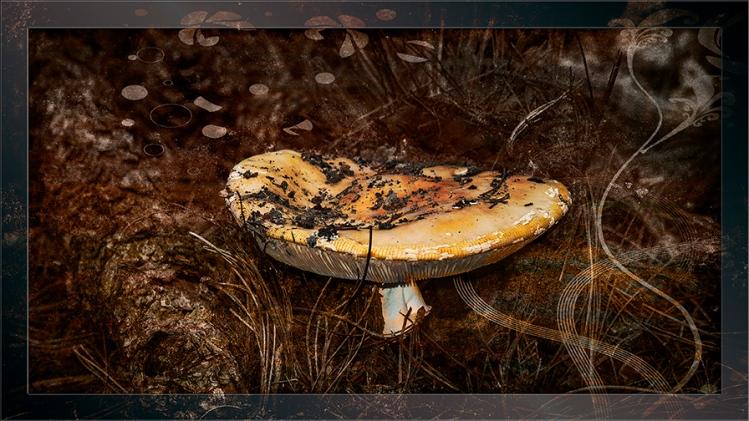Mushroom August 21, 2015-8556 Grunge Art blog