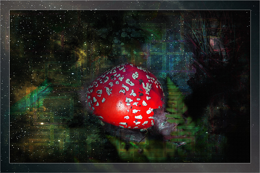 Mushrooms (1 of 1)-2 Grunge Art blog