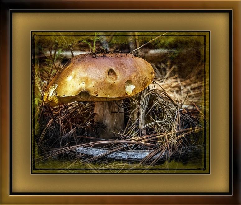 Mushrooms (1 of 1)-8 grunge art blog