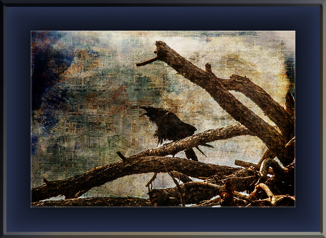 Raven Calling In The Storm (1 of 1) grunge art blog