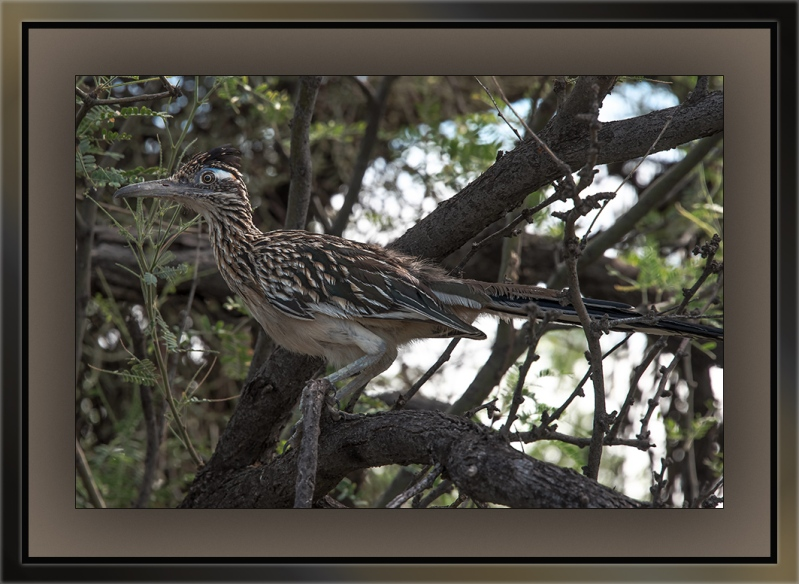 Roadrunner (1 of 1)-3 blog