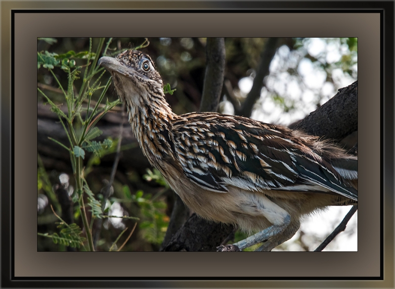 Roadrunner (1 of 1)-5 blog