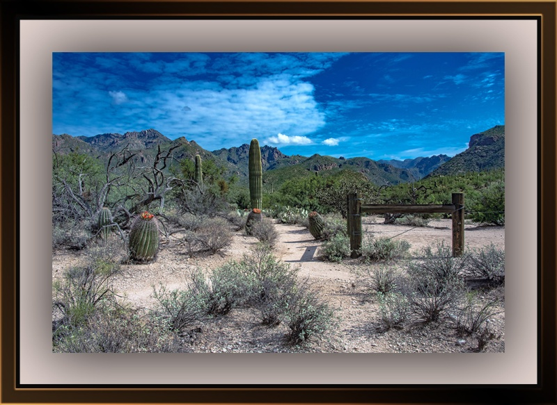 Sabino Canyon Landscape (1 of 1)-2 blog