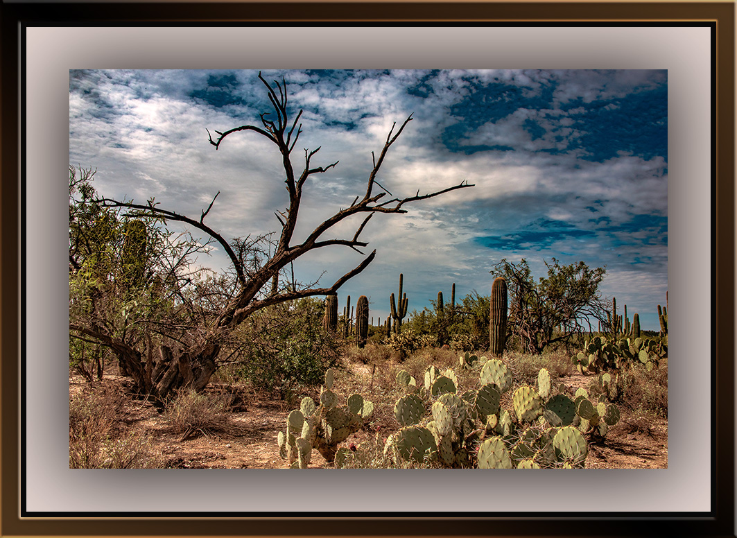 Sabino Canyon Landscape (1 of 1)-3 blog