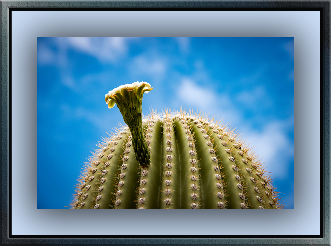 Saguaro cactus (1 of 1) blog