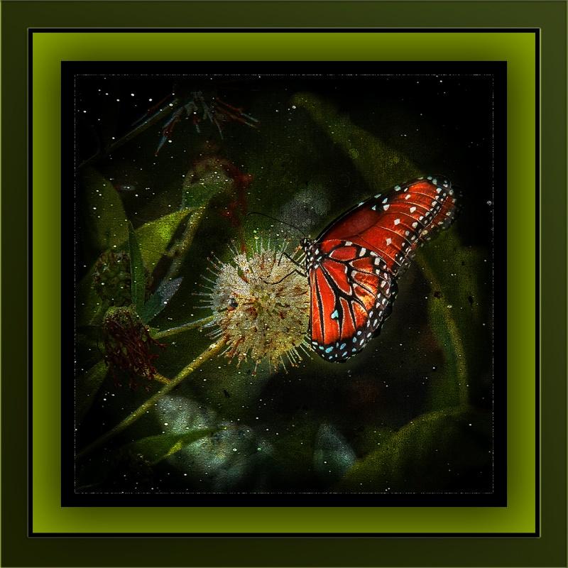 Viceroy Butterfly on Buttonbush (1 of 1) grunge art-3 blog