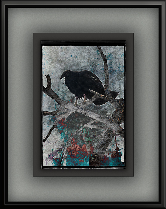 Vultures (1 of 1)-17 grunge art blog
