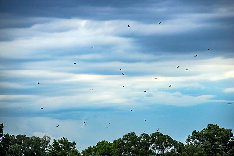 Vultures (1 of 1)-19 blog