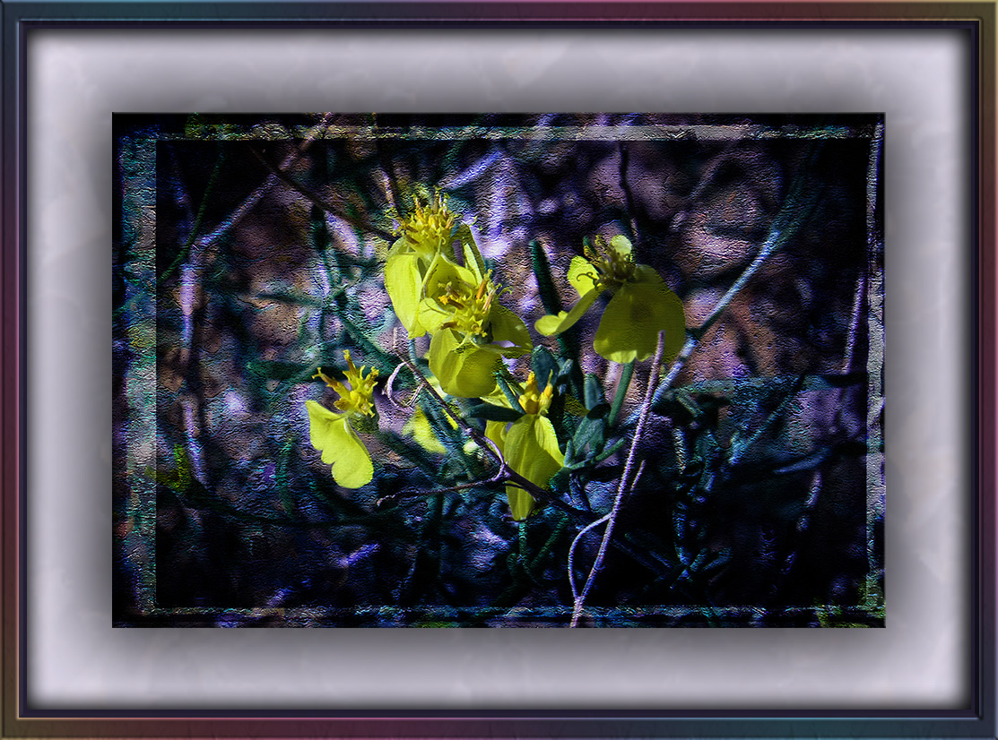 Wildflower (1 of 1) grunge art blog II