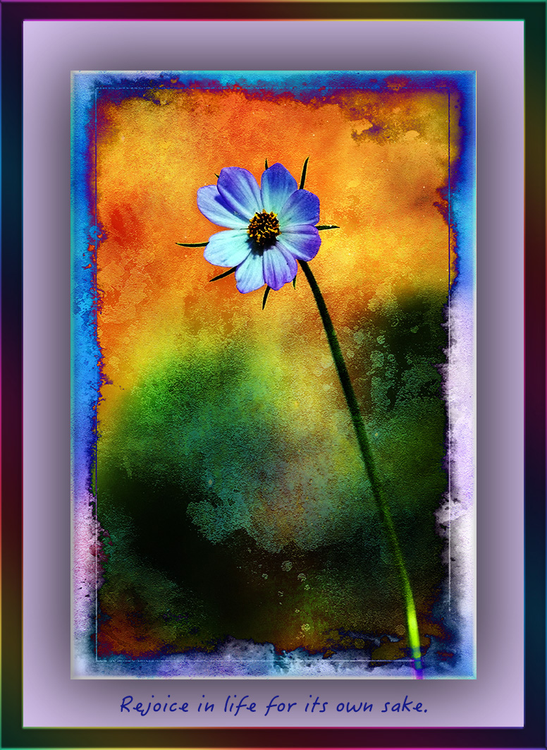 wildflower (1 of 1) grunge blog type