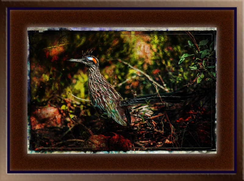 Greater Roadrunner (1 of 1) grunge art blog