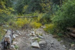 Guthrie Peak Wildflowers (1 of 1)blog