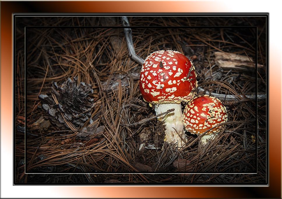 Mushrooms (1 of 1)-10 art_edited-1 blog