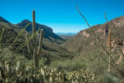 View Toward the Tucson Basin