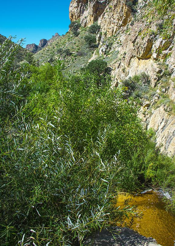 SCVN Friday Hike 10-09-15 (1 of 1)-5 blog