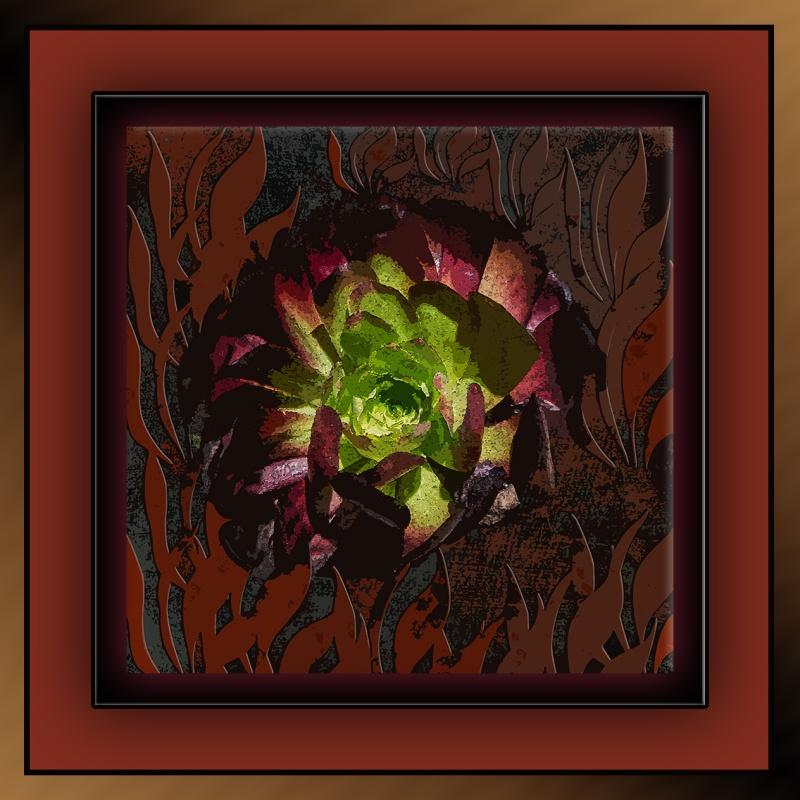 Succulents (1 of 1) art succulents a fire blog