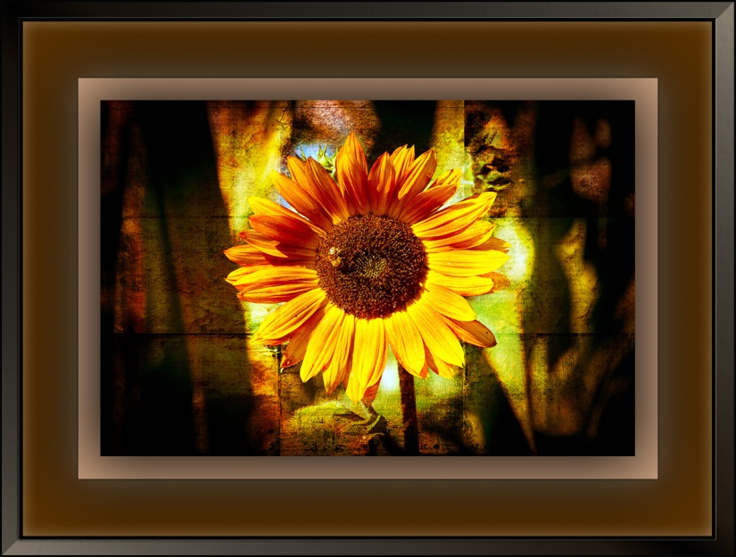 Sunflower (1 of 1)-2 grunge art blog