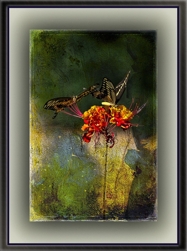 Two-Tailed Swallowtail Butterflies (4 of 6) grunge art blog