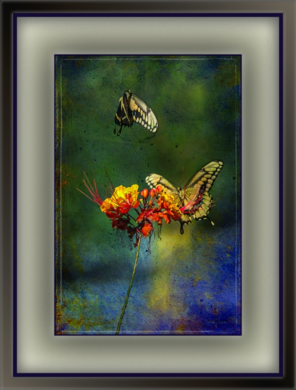 Two-Tailed Swallowtail Butterflies (6 of 6) grunge art blog
