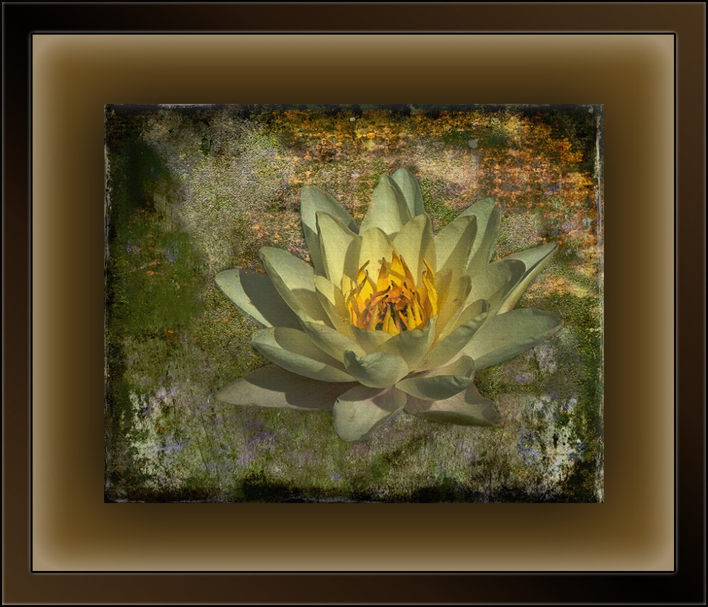 Water Lily (1 of 1)-Art blog