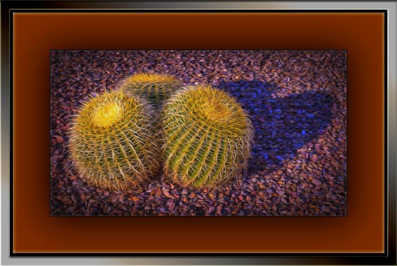 Barrel Cactus (1 of 1) art blog